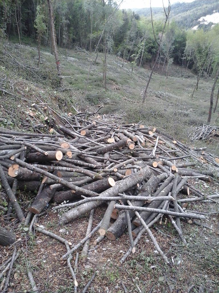 Risultati immagini per boschi cedui taglio foto